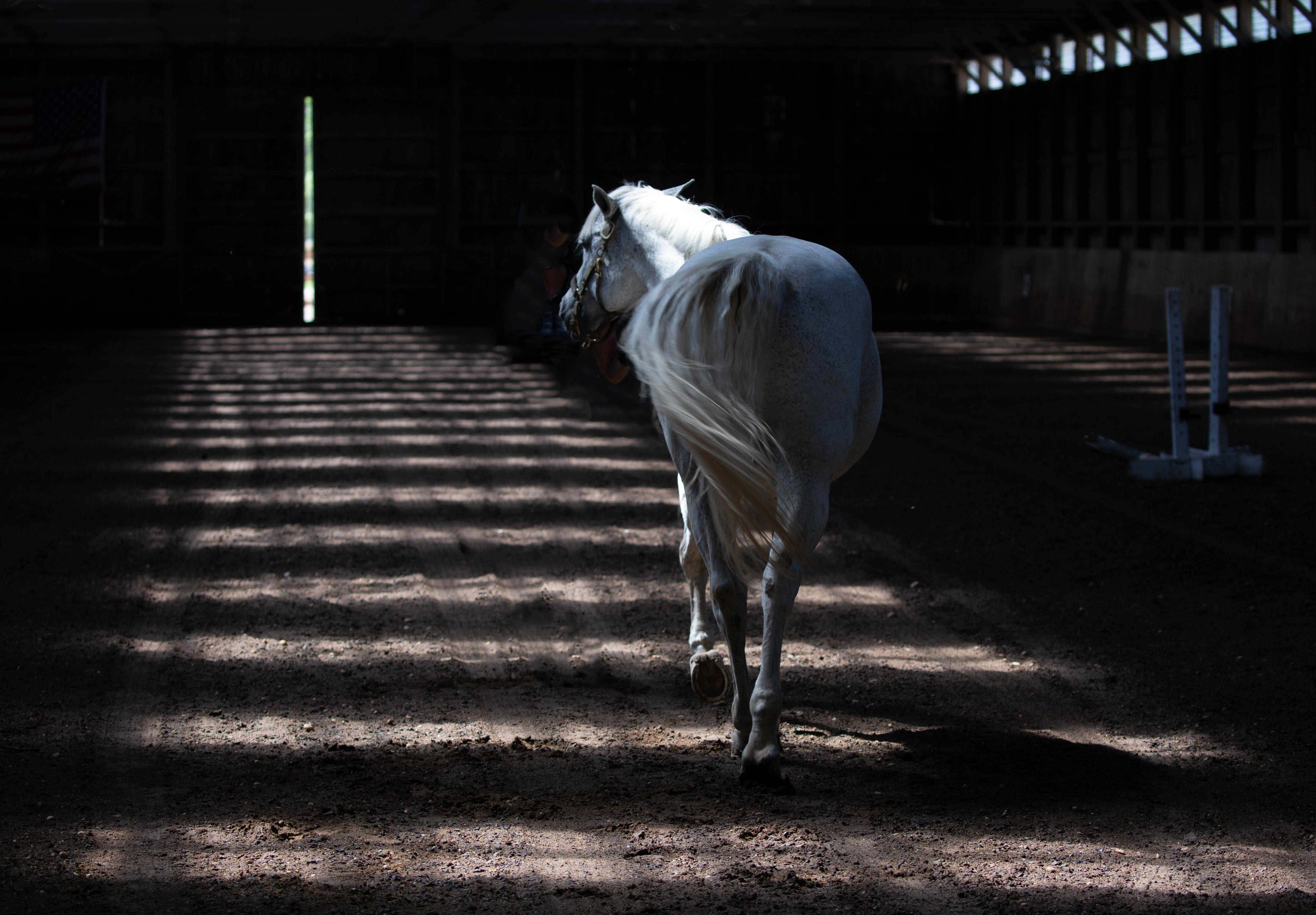 "Third Place Alyson Kanney ""Horse"""