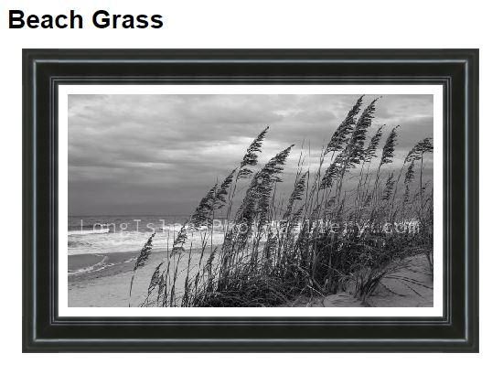 Rickard_beachgrass