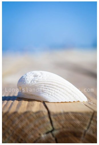 """White Shell on Dock"" by Sue Mignano"
