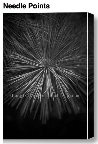 Fine Art Photographer: Jessica Lempin