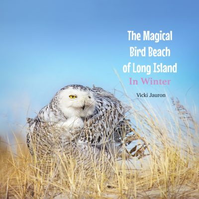 The Magical Bird Beach of Long Island in Winter: A Children's Rhyming Picture Book About the Snowy Owl and Other Winter Birds