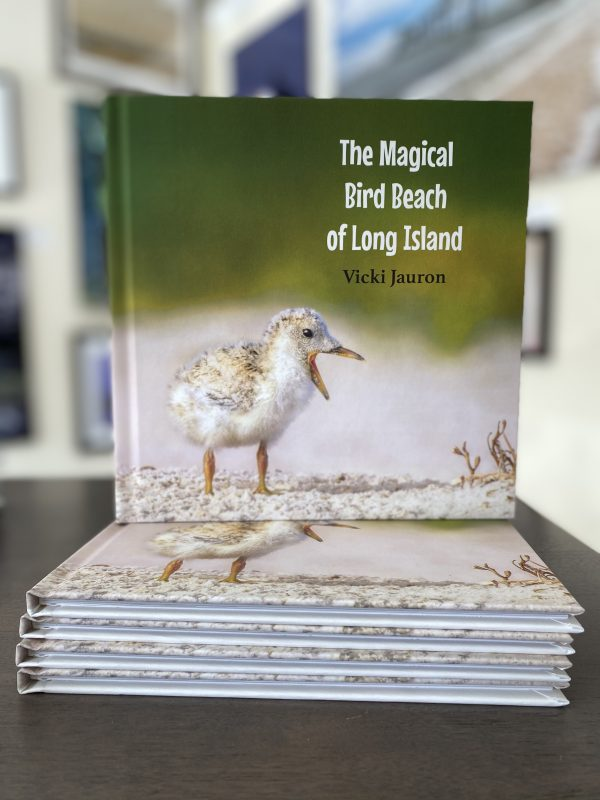 The Magical Bird Beach of Long Island: A Children's Rhyming Picture Book About Shore Birds on Long Island Vicki Jauron