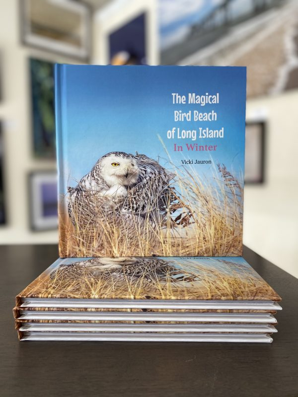 The Magical Bird Beach of Long Island in Winter: A Children's Rhyming Picture Book About the Snowy Owl and Other Winter Birds by Vicki Jauron