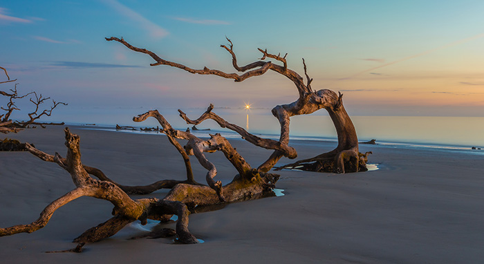 'Driftwood in the Mist' by Richard LaBella | Available at Long Island Photo Gallery
