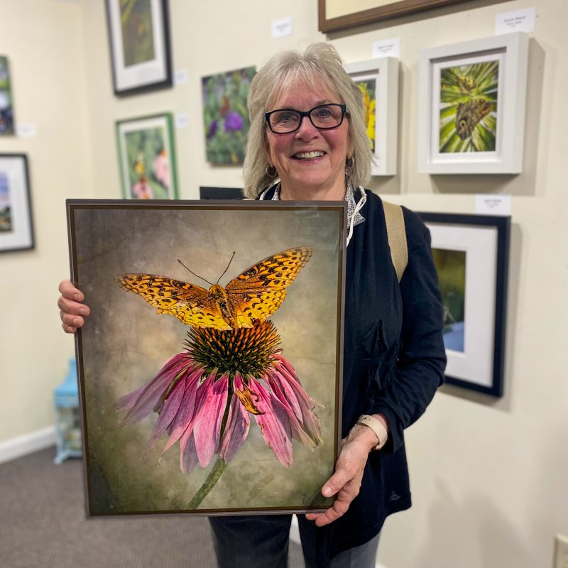 """Honorable Mention is presented to: """"Painterly Butterfly"""" by Bobbie Turner"""