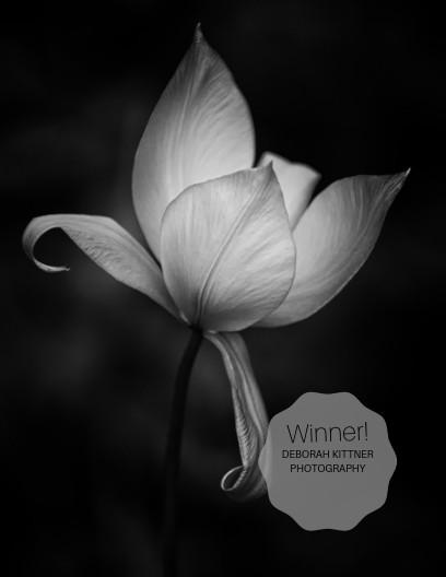 Debbie Kittner Photography