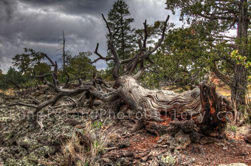 Fallen Tree by Valerie DeBiase