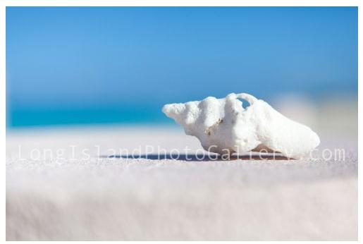 """""""Profile in White"""" by Sue Mignano"""