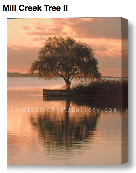 """Mill Creek Tree II"" Photographer: Danielle Leef Location: Water Mill"