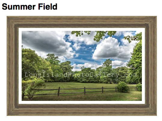 """""""Summer Field"""" Photographer: Jessica Lempin Location: Brightwaters, Long Island, NY"""