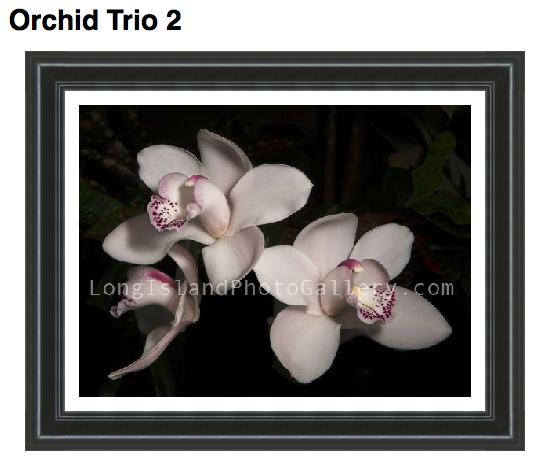 Photographer: RJ LaBella  Description: Orchid Trio photographed at Planting Fields.