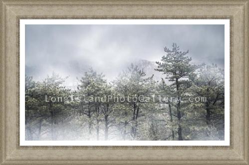 Long Island Pine Barrens