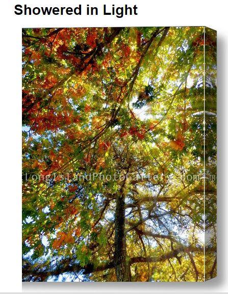 graziano_leaves