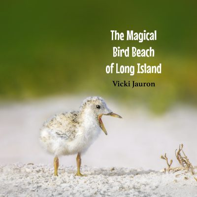 Cover of The Magical Bird Beach of Long Island (3)
