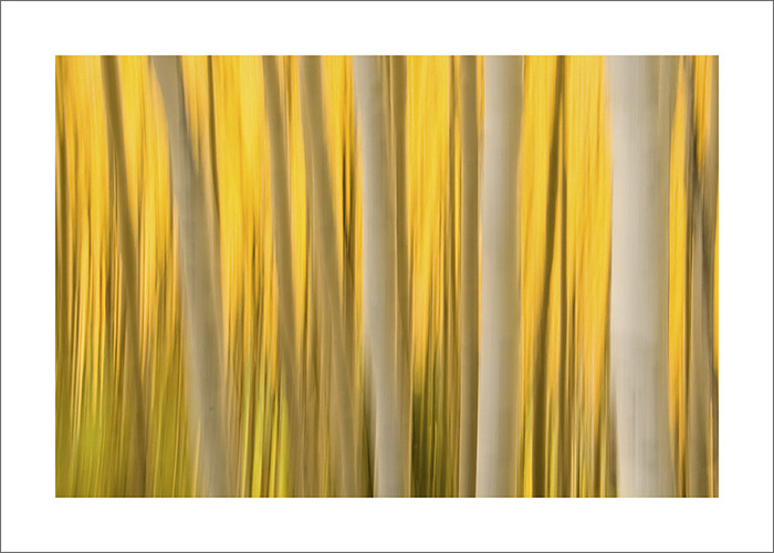 'Aspen' by Joanna McCarthy | Available at Long Island Photo Gallery